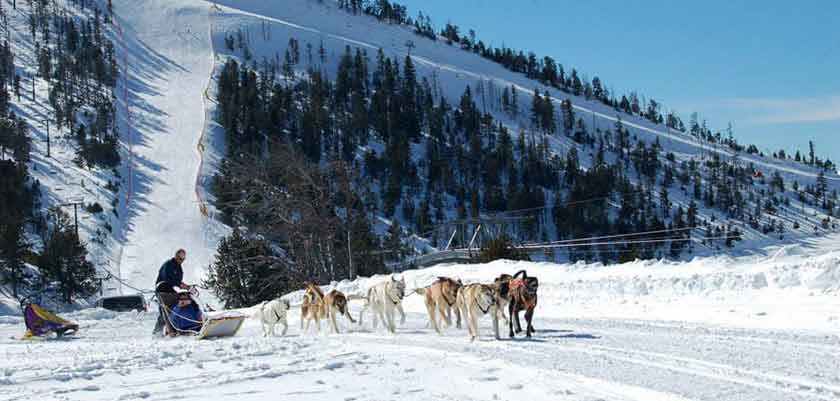 Andorra_Arinsal_Dog-sledding.jpg